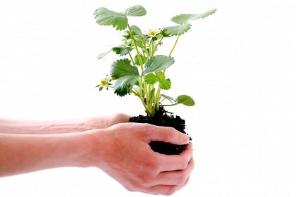 Wykaz ekologicznych środków ochrony roślin 2020r.