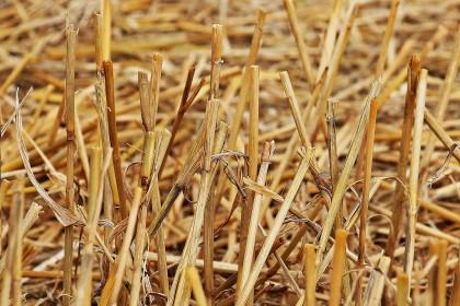 Herbicydy totalne – czym są, jak działają i kiedy je stosować?