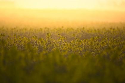 Nawozy z molibdenem - Po co molibden w uprawie roślin?