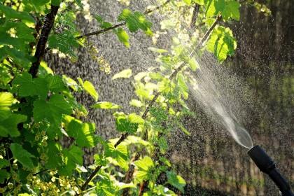 Środki ochrony roślin – podstawowe pojęcia