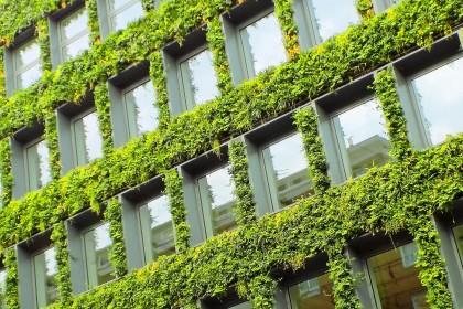Zielona ściana - czym jest ogród wertykalny?