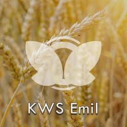 Pszenica ozima KWS Emil, C1, opak. 50kg