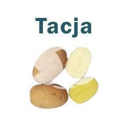 """Ziemniaki sadzeniaki Tacja - PL, klasa B, kal. 35-55mm, opak. a""""50kg"""