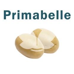 """Ziemniaki sadzeniaki Primabelle - PL, Klasa A, kal.35-55mm, opak. a""""25kg"""