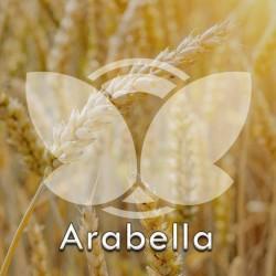Pszenica jara Arabella, C1, opak. 25kg
