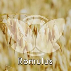 owromulus.jpg