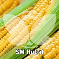Kukurydza SM Hubal F1, C1, opak. 80 tys.n.