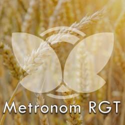 Pszenica ozima RGT Metronom C1, opak. 50kg