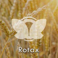 Pszenica ozima Rotax C1, opak. 50kg