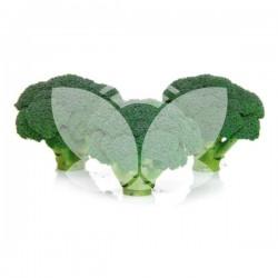 brokulares.jpg