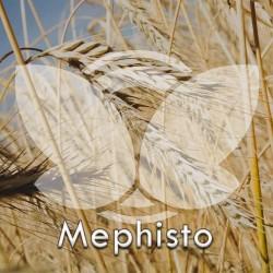 Żyto ozime Mephisto F1, C1, opak. 1 mln.n.