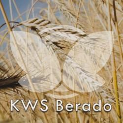 Żyto ozime KWS Berado F1, C1, opak. 1 mln.n.