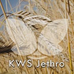 Żyto ozime KWS Jethro F1, C1, opak. 1 mln.n.