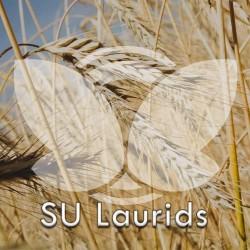 Żyto ozime SU Laurids F1, C1, opak. 1,3 mln.n