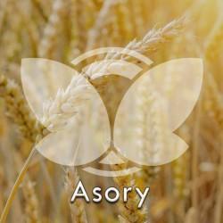 Pszenica ozima Asory, C1, opak. 50kg