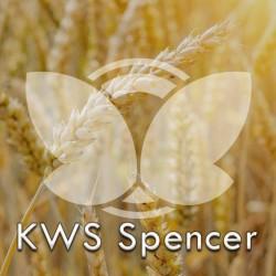 Pszenica ozima KWS Spencer, C1, opak. 50kg