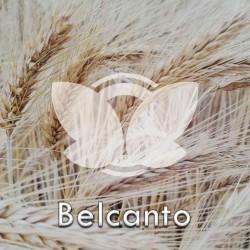 Pszenżyto ozime Belcanto, C1, opak. 50kg