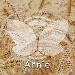 Pszenica ozima Annie, C1, opak. 50kg