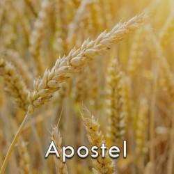 Pszenica ozima Apostel, C1, (4j.s./ha) opak. 1 mln.n. (39,2kg)