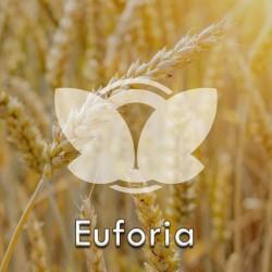 Pszenica ozima Euforia C1, opak. 50kg