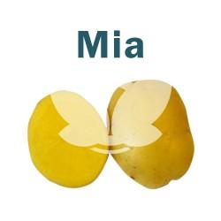 """Ziemniaki sadzeniaki Mia - PL, klasa A, kal. 35-55mm, opak. a""""25kg"""