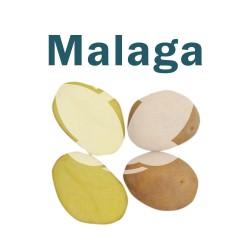 "Ziemniaki sadzeniaki Malaga - PL, Klasa A, kal. 35-55mm, opak. a""50kg"