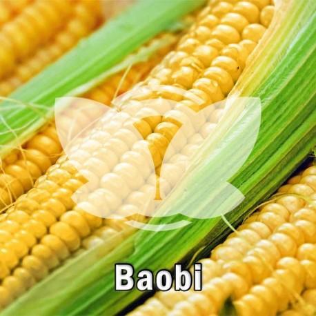kukurydza_baobi.jpg