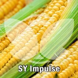kukurydza_impulse.jpg