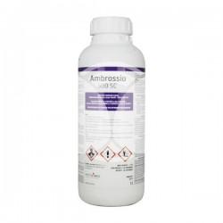 Ambrossio 500 SC 1L