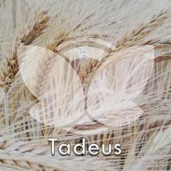 Pszenżyto ozime Tadeus, C1, opak. 25kg