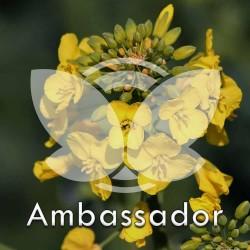 rzepak-ambassador.jpg