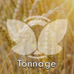 Pszenica ozima Tonnage, C1, opak. 30kg