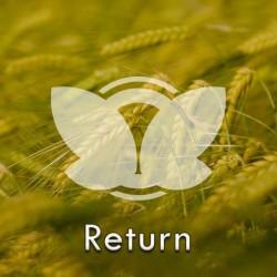 jeczmien-return.jpg