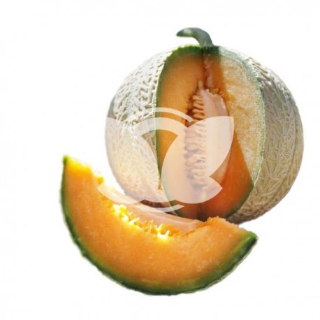 melon-enduro-sakata.jpg