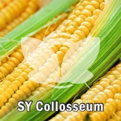 kukurydza_sy_colloseum_syngenta.jpg